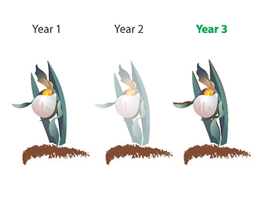 Evolution of sprouting